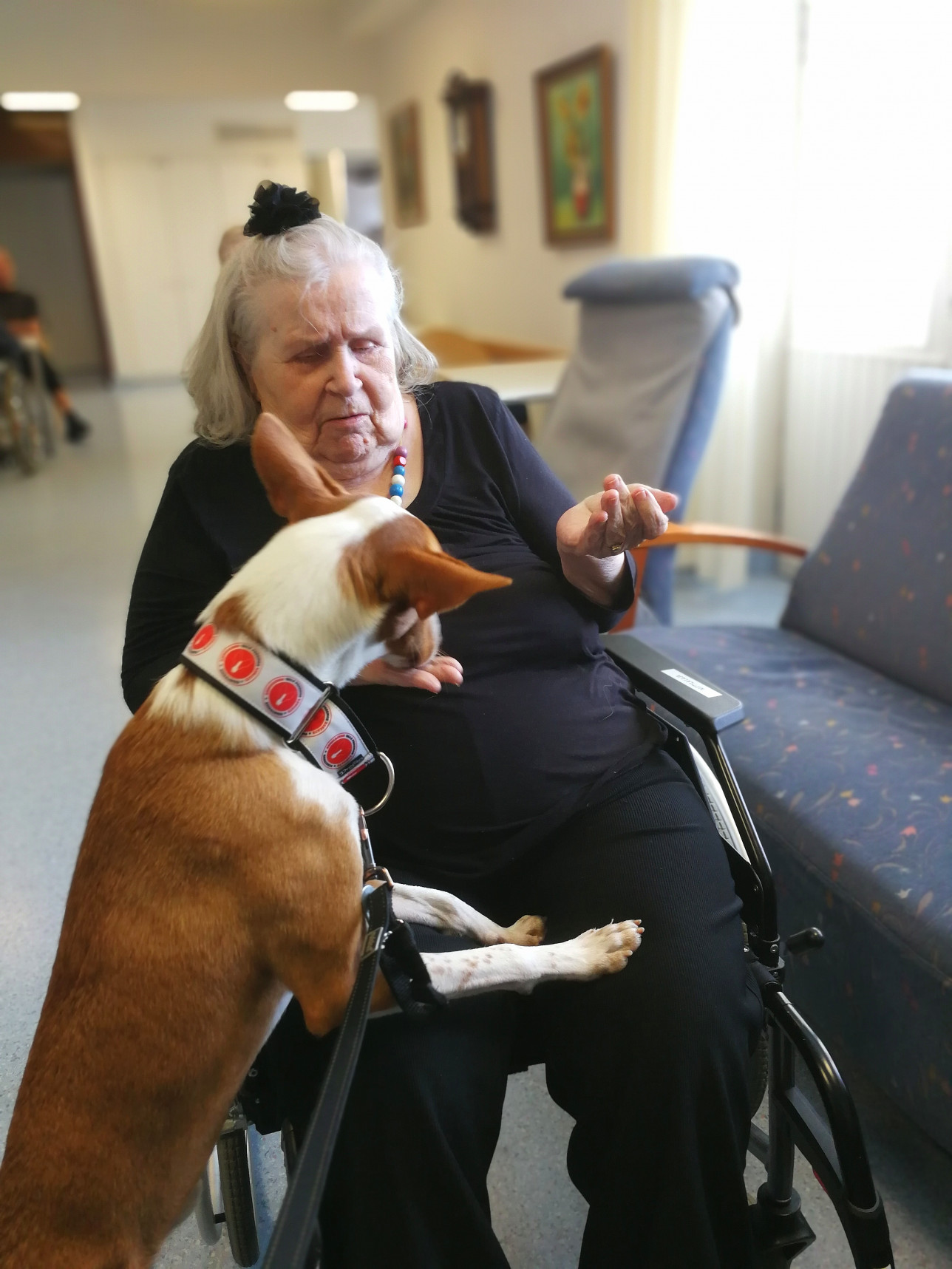 Koiralle annetaan herkkuja