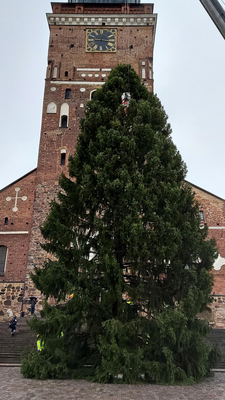 Vuoden ykköskuusi kirkon edessä pystyssä