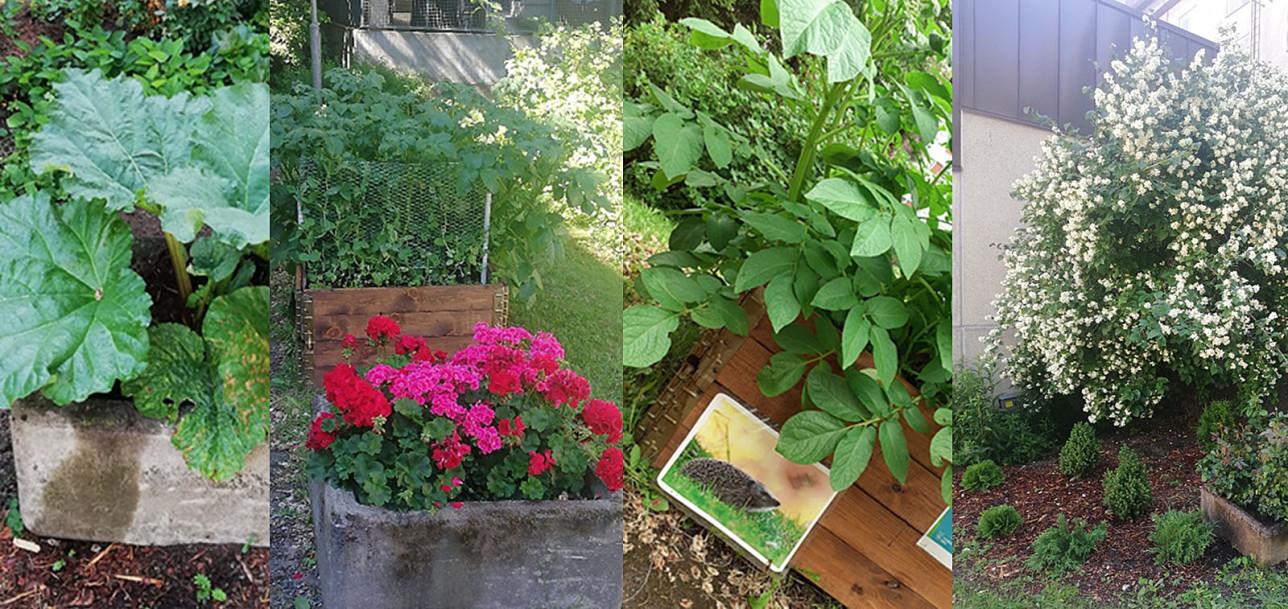 Kasveja ja kukkia