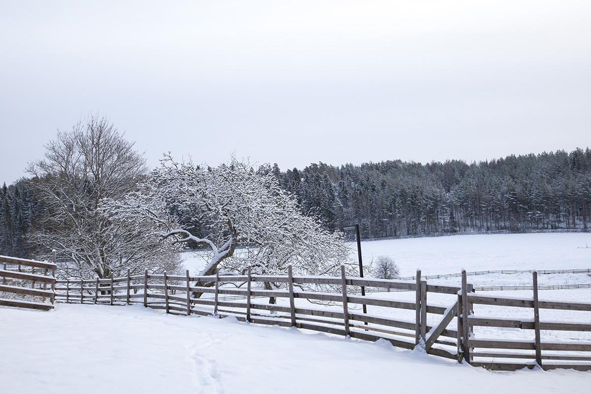 Talvinen maisema Kuralan Kylämäessä