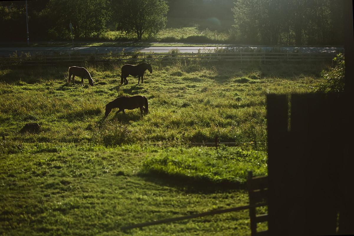 Hevosia Kuralan Kylämäen laitumilla