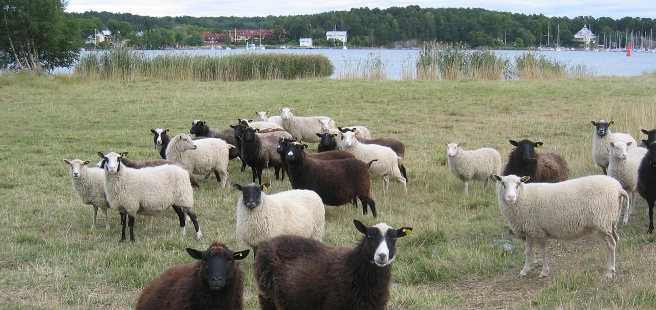 Eläimet hoitavat ranta-alueita n. 230 hehtaarin alalla eri puolilla kaupunkia.