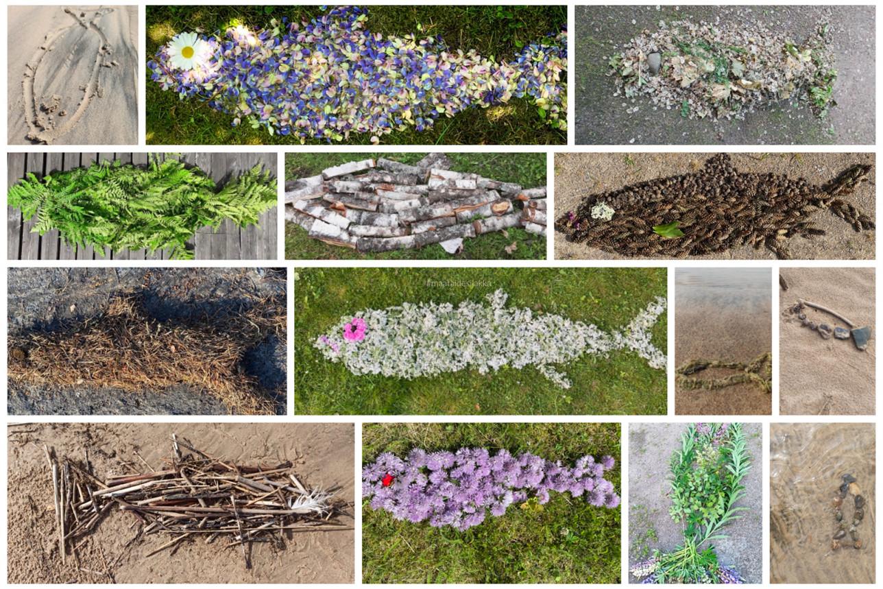 Erilaisia luonnonmateriaaleista muodostettuja silakanmuotoisia maataideteoksia