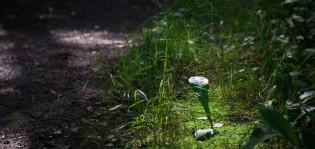 Kasveja Ruissalon luontopolulla