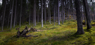 Metsä auringonlaskussa