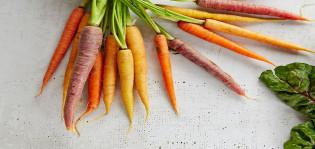kuvapankkikuva erivärisistä porkkanoista