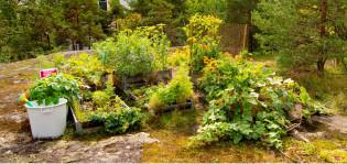 Viljelylaatikoissa voi kasvattaa vaikka keskellä kaupunkia