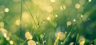 kesäinen niitty ja kastetta