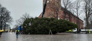 Vuoden ykköskuusi lavetilla pitkällään Tuomiokirkkotorilla
