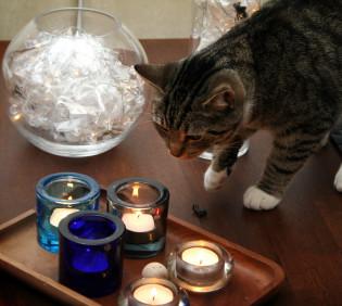 Kissa katselee kynttilöitä