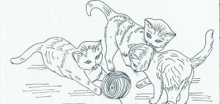 Kissapiirustus