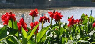 Kukkia Aurajokirannassa