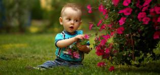 Lapsi istuu kesällä nurmikolla ja koskee kukkaistutukseen.