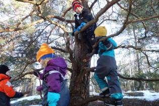 Lapset kiipeilevät puussa