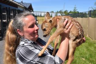 Eläinsuojeluvalvoja Heidi Leyser-Kopra ja metsäkauris