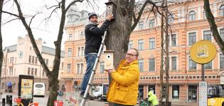 Kaksi miestä ripustaa merkkivuoden linnunpönttöjä kaupungintalon puistossa.