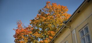 Puu ruskaloistossaan talon pihalla