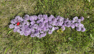 Vihreällä nurmella kukan terälehdistä muodostettu silakan muotoinen maataideteos.