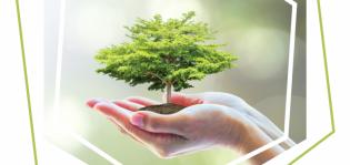 Kuvituskuva käsien päällä kasvavasta puusta