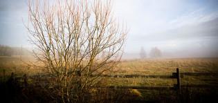 Sumu pellolla