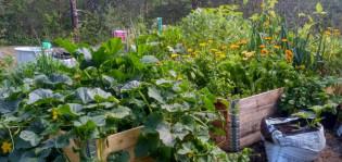 Syötävää voi kasvattaa kaupungin maa-alueella