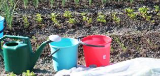 Kastelukannu, ämpäreitä ja istutuksia viljelypalstalla