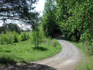Tie metsässä
