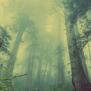 Spefilukupiirin kuvituskuva, utuinen mutta valoisa metsänäkymä
