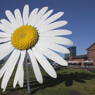 Päivänkakkara Forum Marinumin edustalla