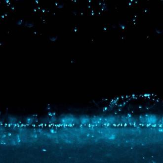 Levän sinertävä valoshow mustaa taustaa vasten