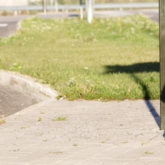 Mette-koira matkustaa bussilla