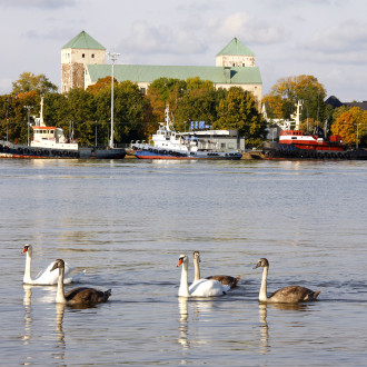 Joutsenet uimassa, taustalla aluksia, syksyisiä puita ja Turun linna.