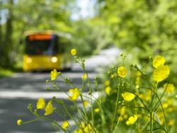 bussi_ajaa_tiella_kesalla.jpg