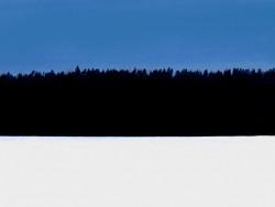 estonian_flag_winter_forest.jpg