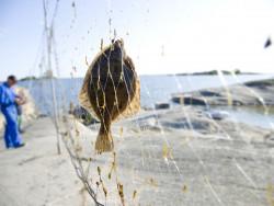 kalaverkossa.jpg