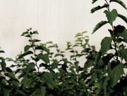 kasveja_seinustalla.jpg