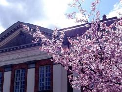 kirsikkakukat_ja_kirjasto.jpg