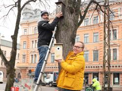 petri_uggeldahl_ja_mikko_laine_ripustamassa_linnunponttoja.jpg