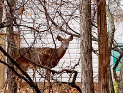 uncommonworlds-deer-002.jpg