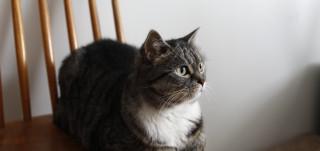 Kissa