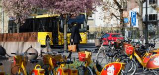 Keltainen Föli-bussi kukkivien kirsikkapuiden alla. Etualalla keltapunaisia Föli-fillareita pyöräparkissa.