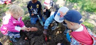 Neljä lasta istuttaa kasveja maahan