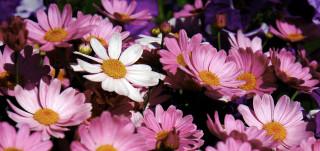 Kuva kukkasista