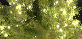 Tuomiokirkon joulukuusi