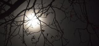 Kuu näkyy puiden oksien läpi