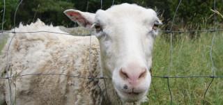 lammas Maisaaressa