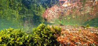 Valoisa kuva merenpohjasta