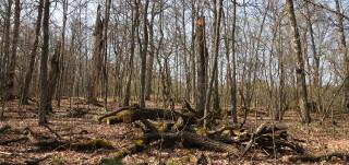 Ruissalon metsää