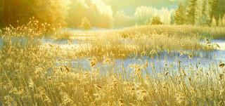Metsä talvella auringonlaskussa