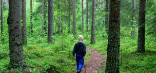 Poika metsäpolulla
